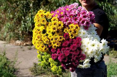 Консультации агронома.Услуги по выращиванию цветочный культур.