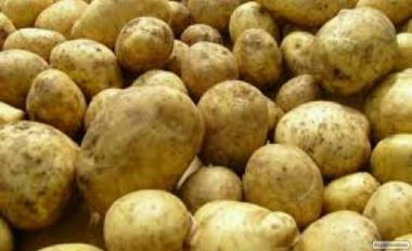 Продам картофель оптом Ривьера