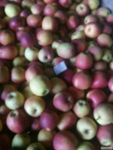 Яблука оптом від виробника. 9 сортів відмінної якості. Телефонуйте!