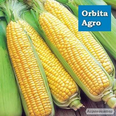 Семена кукурузы Галатея