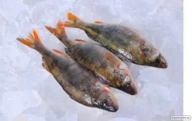 Купить рыбу оптом. Продажа речной рыбы.