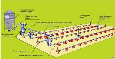 Обладнання для підлогового вирощування бройлерів