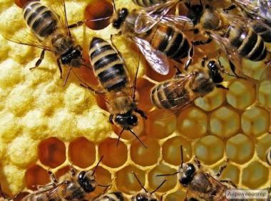 Продам пчелосемьи в Луганской области Кременской район 2019г.