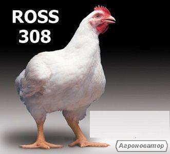 Яйцо Инкубационное Бройлера росс 308