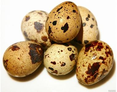 """Продам інкубаційні яйця перепелів породи """"Фараон"""""""