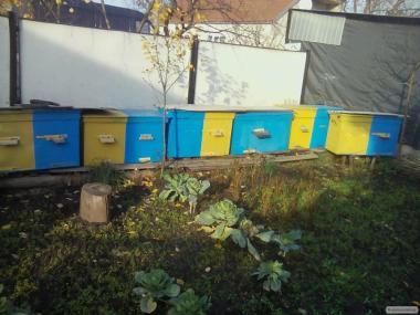 Продам пчелы с ульями.