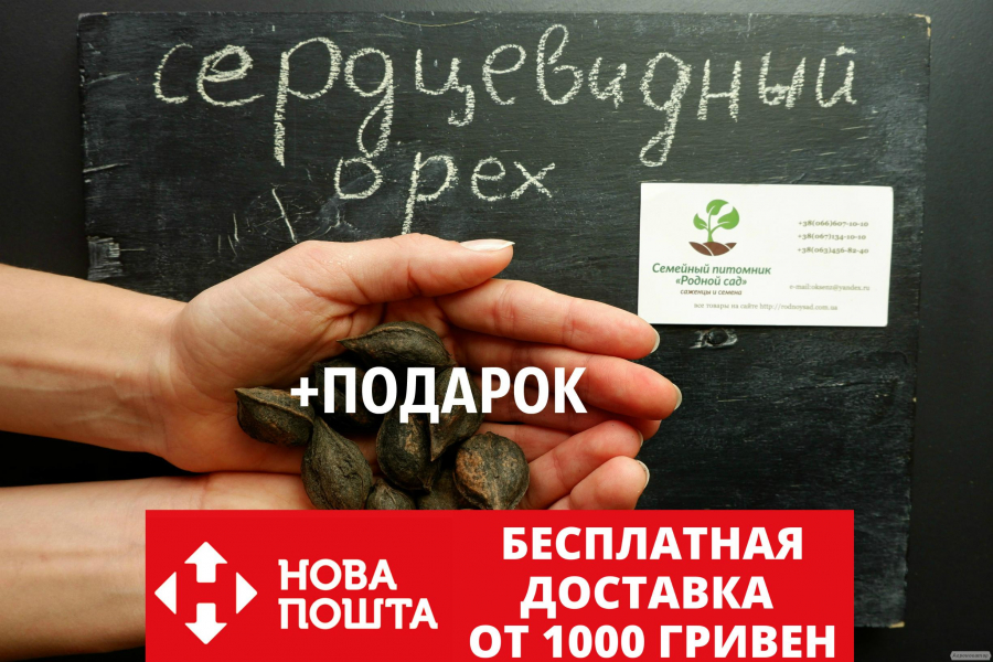 Орех сердцевидный семена(10шт)Juglans cordiformis для саженцев насіння
