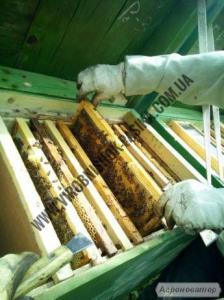 Продам бджолопакети 4-рамки, карпатка 2017
