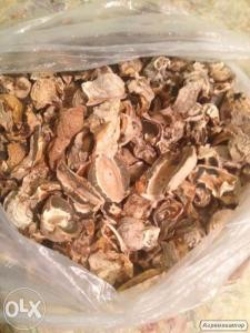 Продам гриб Веселка