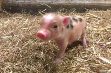 Продаж діючої тваринницької ферми