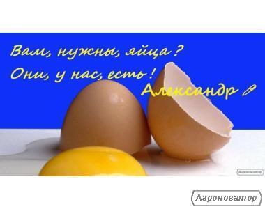 Продам яйцо куриное оптом и в розницу