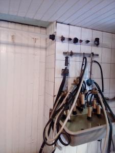 Доїльний апарат для корів