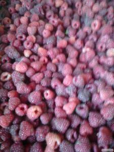 Продам замороженные ягоды оптом