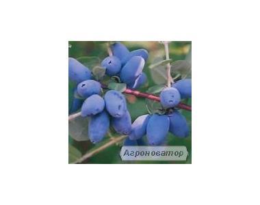 Саджанці фруктових дерев, кущів та квітів