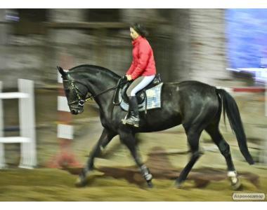 Конные прогулки и конный спорт для взрослых и детей