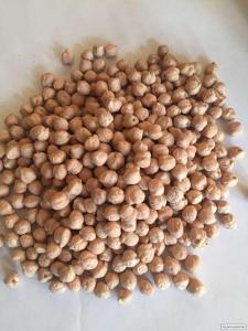 """Продам насіння нуту """"Мексикан"""""""