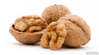 Продаємо волоський горіх у шкаралупі з Родзинок і регіону.