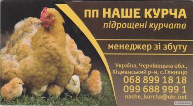 підрщена птиця підрощені курчата бройлер несучка мулард