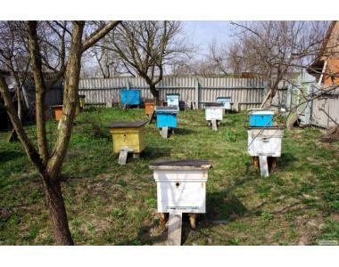 Бджоли з вуликам, Пчелосемьи. Пчёло-семьи с ульями