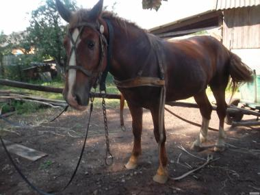 продам лошади