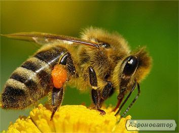 Продам пчелопакеты в количестве 90 шт.