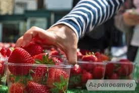 Пінетки, контейнери для ягід малини, полуниці, ожини, чорниці