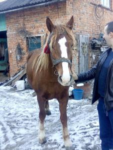 пара коней