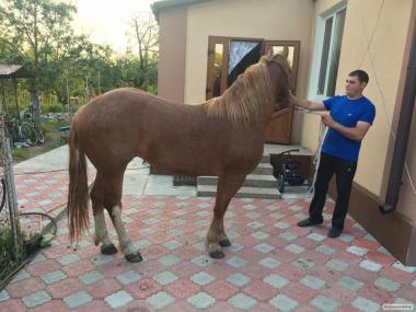 Продам коня!