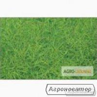 Семена рапса озимого ЛЕМБКЕ гибрид Абакус