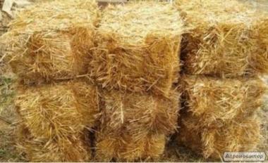 Продажа тюков соломы 7 грн/тюк с поля, Винницкая обл.