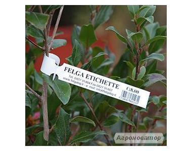 Етикетка для рослин петля Allfolin 25х197мм (1000 штук в рулоні, 4