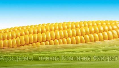 Посівний матеріал гібридів кукурудзи «ЄВРАЛІС СЕМЕНС» (EURALIS SEMENS)