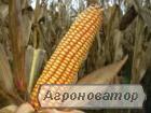 Насіння кукурудзи ДН Пивиха, Оржиця, Дніпровський, Кремінь, Моніка, Солон