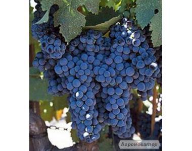 Продам елітне сухе червоне вино - Каберне Фран