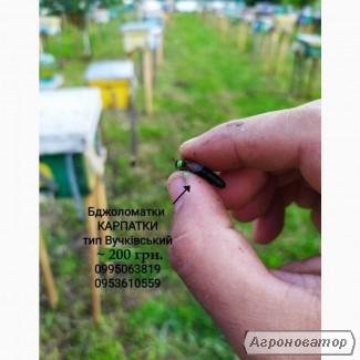 Бджоломатки Карпатки 2020 тип Вучківський