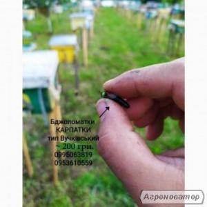 Бджоломатки Карпатки 2021 тип Вучківський
