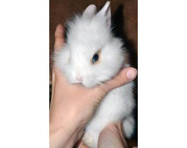 Кролики - милашки Cрочно!!!