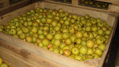 Яблука оптом від виробника.