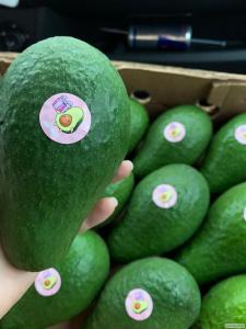Королівське авокадо