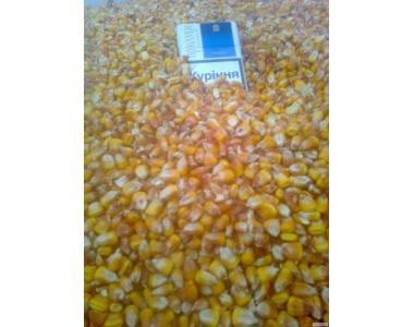 Продам от производителя кукурузу Фураж около 150 тонн с хозяйства