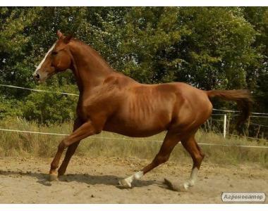 продам коня !!!!!!