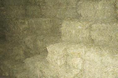 Продам сіно лугове різнотрав'я урожай 2016 р .Відмінної якості