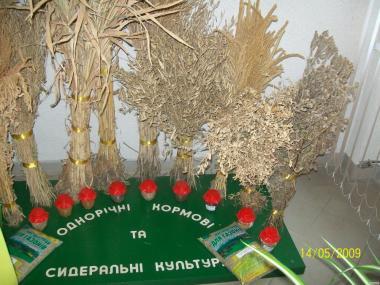 Насіння кормових та газонних трав