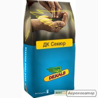Насіння озимого ріпаку Монсанто гібрид ДК Секюр, Київ р.