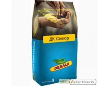 Семена рапса озимого Монсанто гибрид ДК Секюр, г. Киев