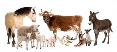 Другие ветпрепараты для животных