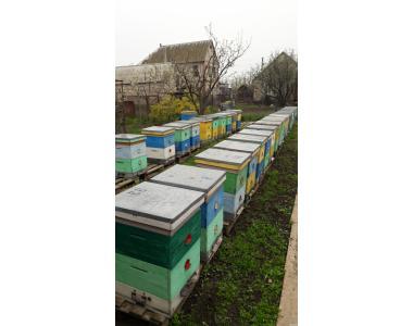 Продам бджолосім'ї Карпатка.