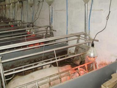 Обладнання для вирощування і утримання свиней