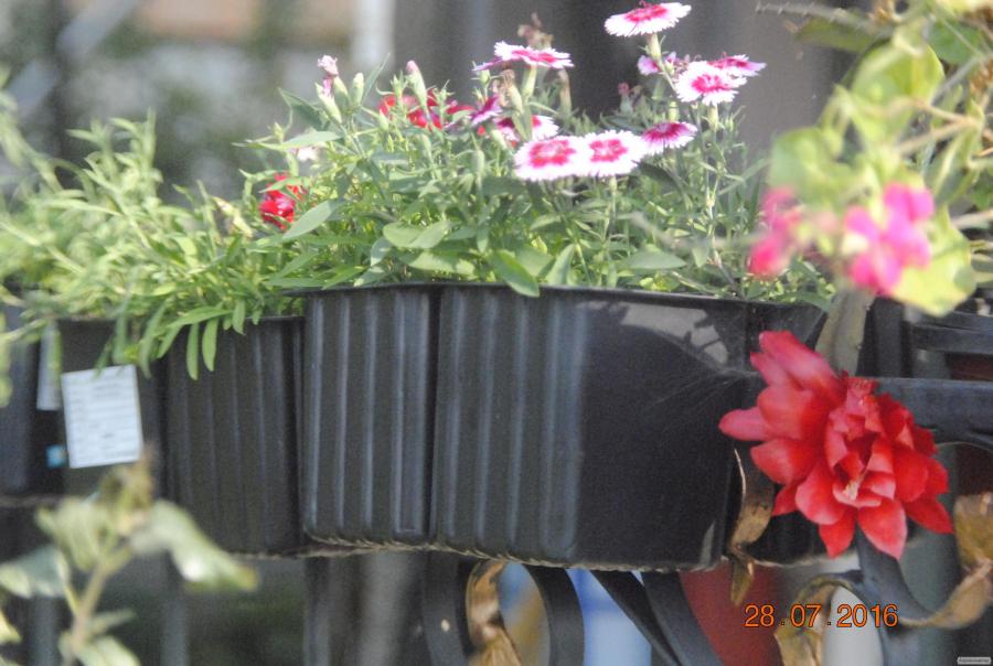 Оригинальный цветочный горшок 4 в 1
