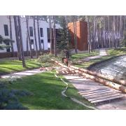 аварийные опасные деревьев. Спил,обрезка, валка,формирование деревьев.